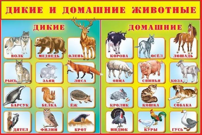 Картинки по запросу дикие и домашние животные картинки для детей