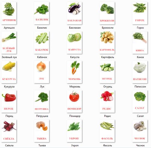 Овощи на картинках для детей
